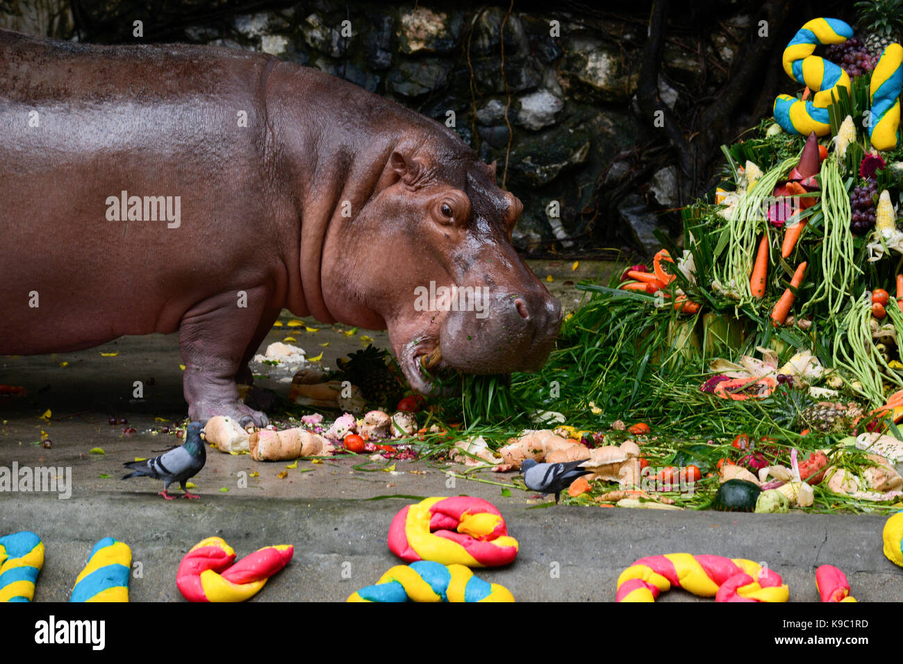 Hippopotamus Mali Eats Her Birthday Cake Made Of Fruit And Vegetables In Front Grandchild Makam At A Party To Celebrate 51th Dusit