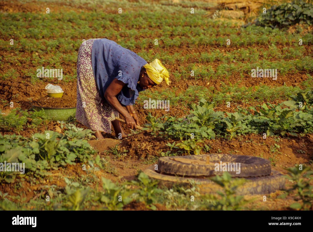 Korhogo, Ivory Coast, Cote d'Ivoire.  Senoufo Woman Tending her Garden Plot. - Stock Image
