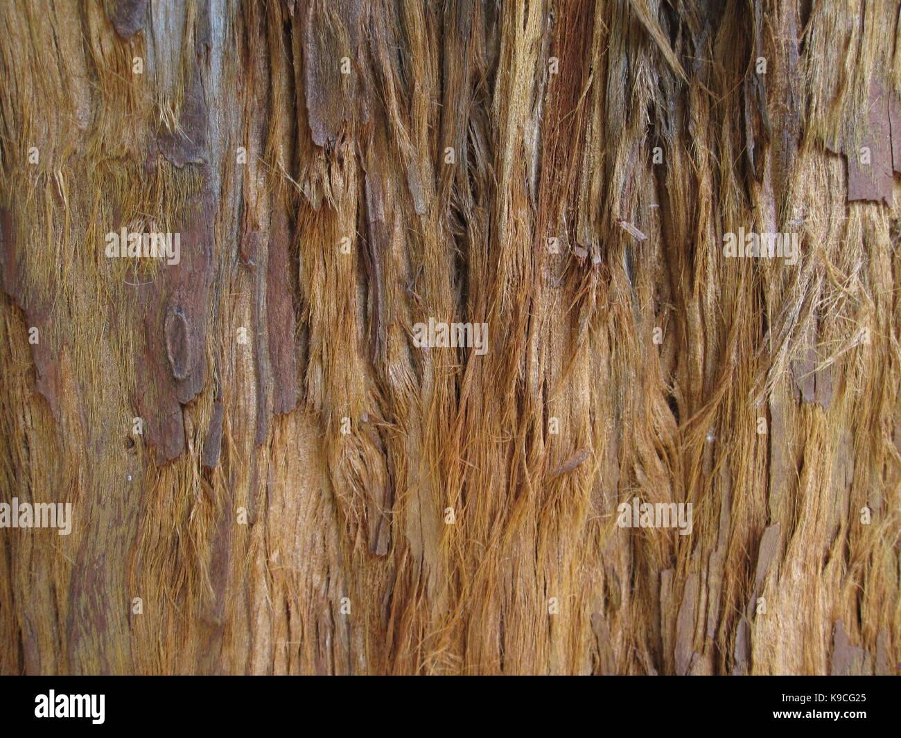 Casca de árvore com fibras, rústica - Stock Image