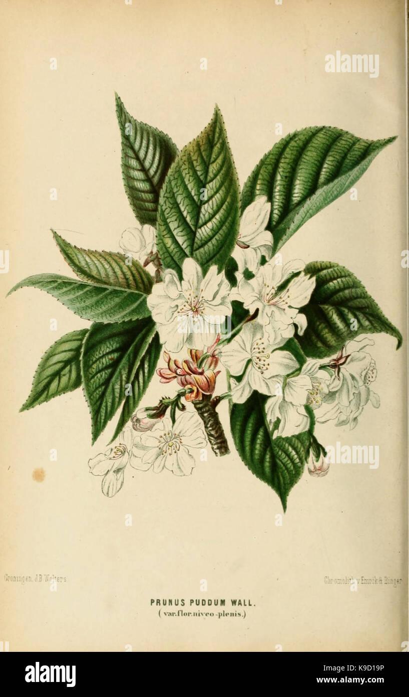 Neerland's Plantentuin (Pl. 53) (8968117389) - Stock Image