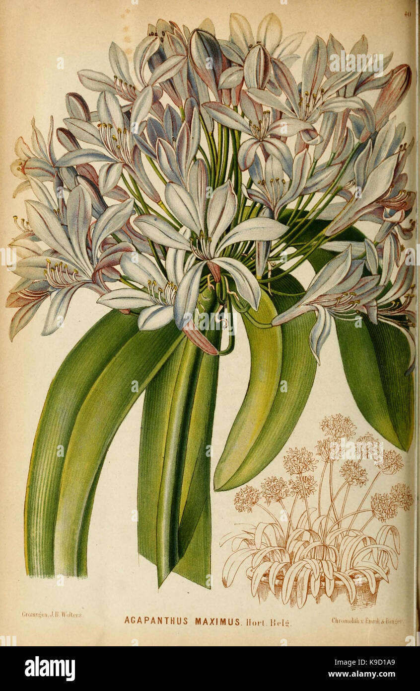 Neerland's Plantentuin (Pl. 40) (8968091951) - Stock Image