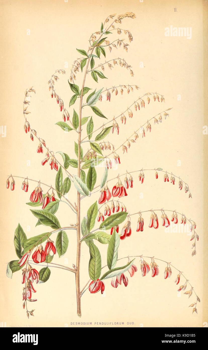 Neerland's Plantentuin (Pl. II) (8792436831) - Stock Image