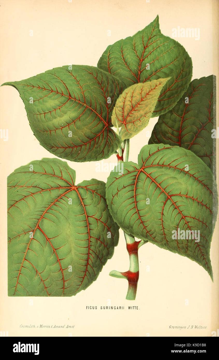 Neerland's Plantentuin (Frontispiece) (8803011906) - Stock Image