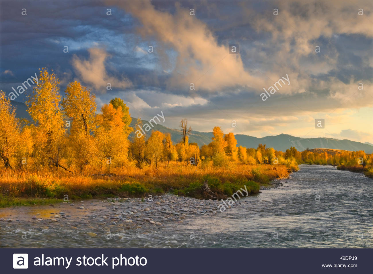 The Gros Ventre River, Narrowleaf Cottonwood, and Sunset Light in Fall, Grand Teton National Park, Wyoming - Stock Image