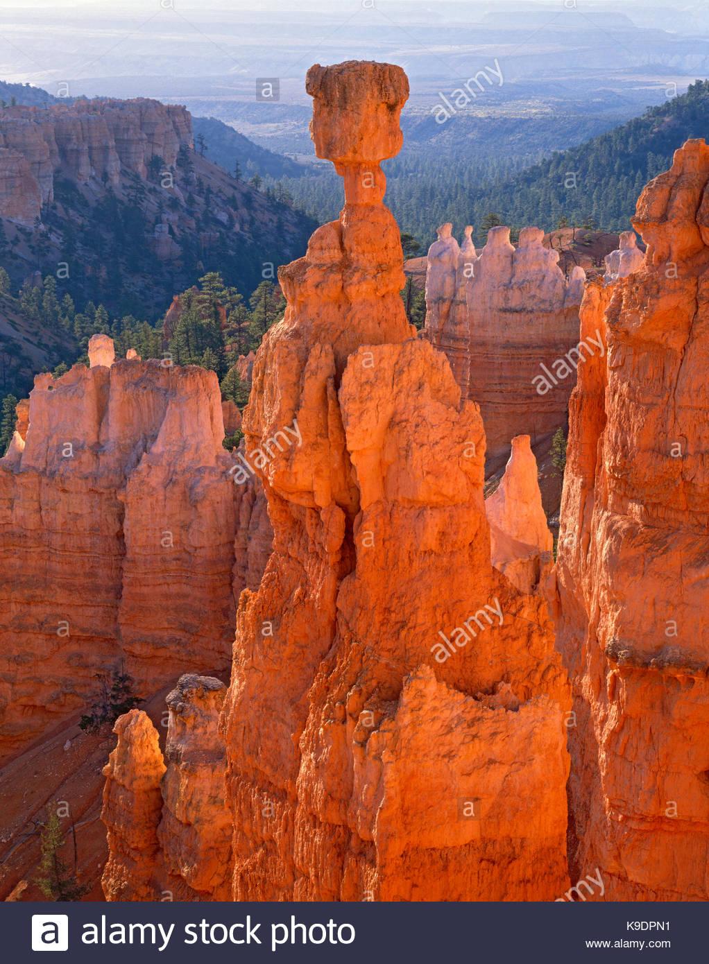 Thor's Hammer, Bryce Canyon, National Park, Utah - Stock Image