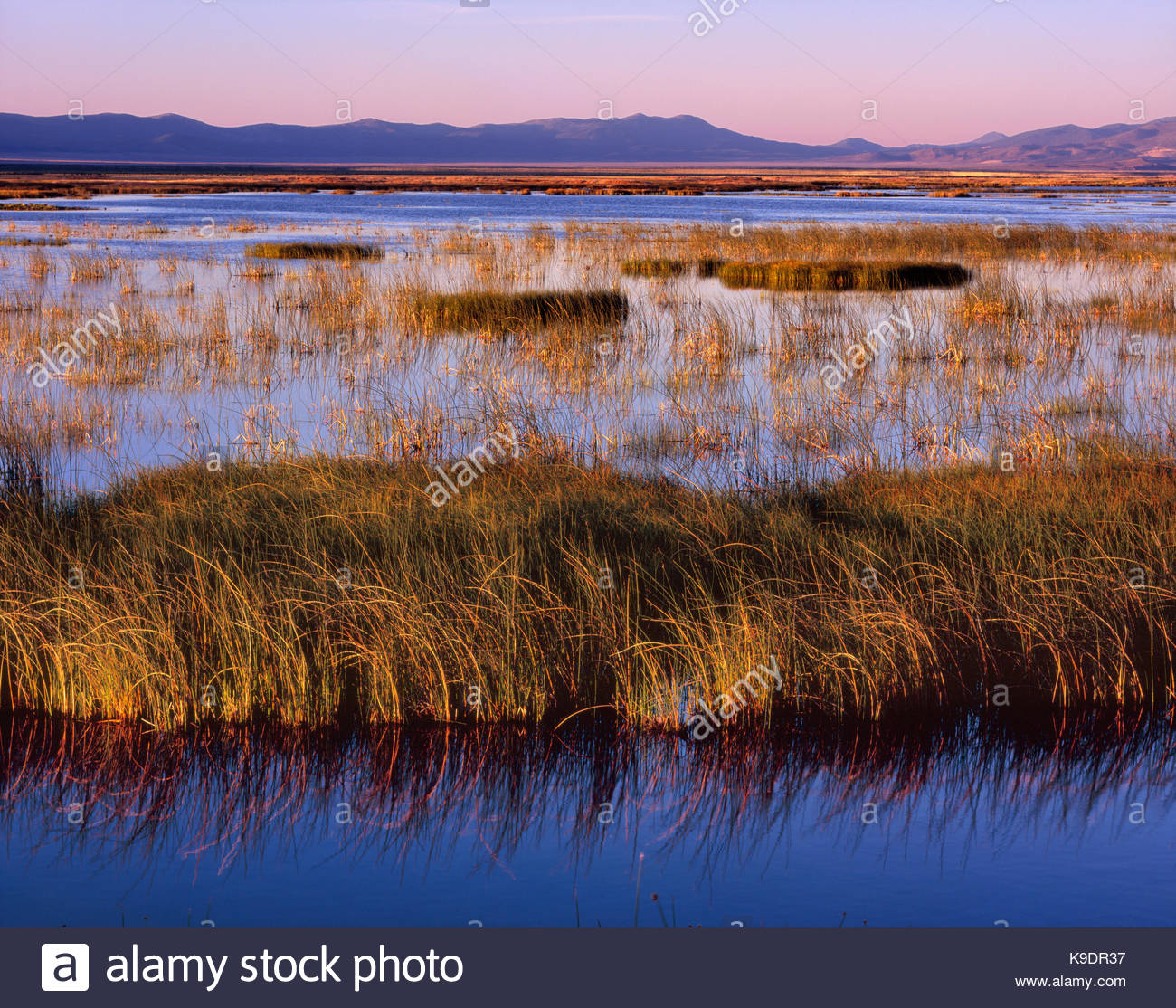 Sunrise, Ruby Lake National Wildlife Refuge, Nevada - Stock Image