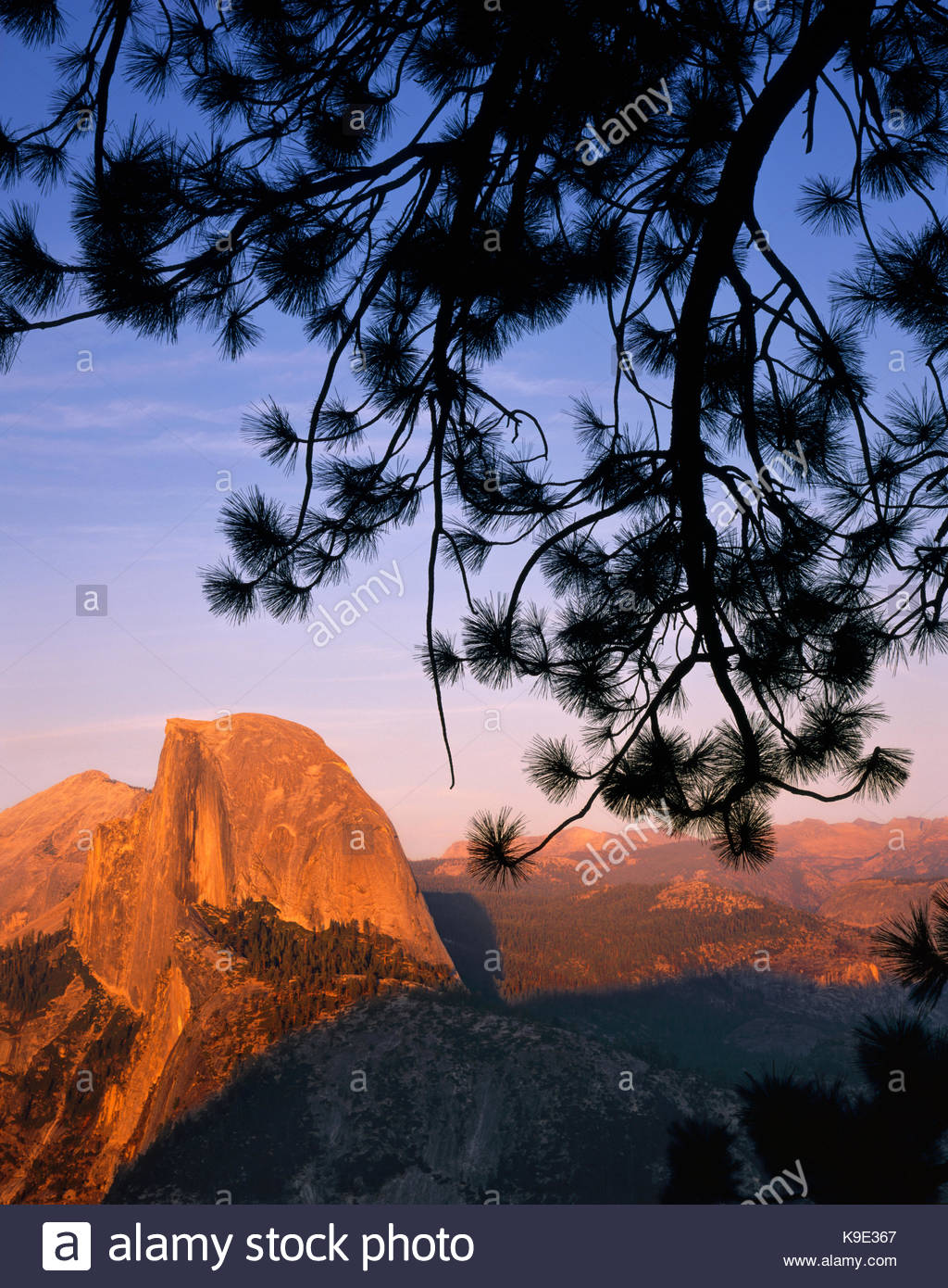 Half Dome and Jeffrey Pine from Glacier Point, Yosemite National Park, California Stock Photo