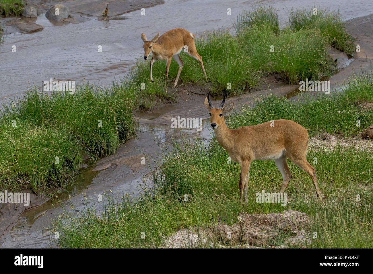 Taranguire National Park - Stock Image