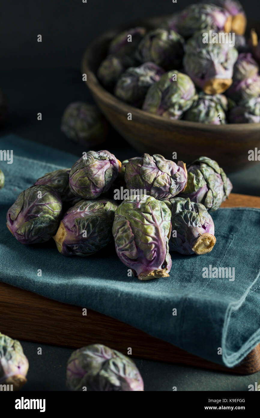 Raw Green and Purple Brussel Sprouts Ready to Cook - Stock Image