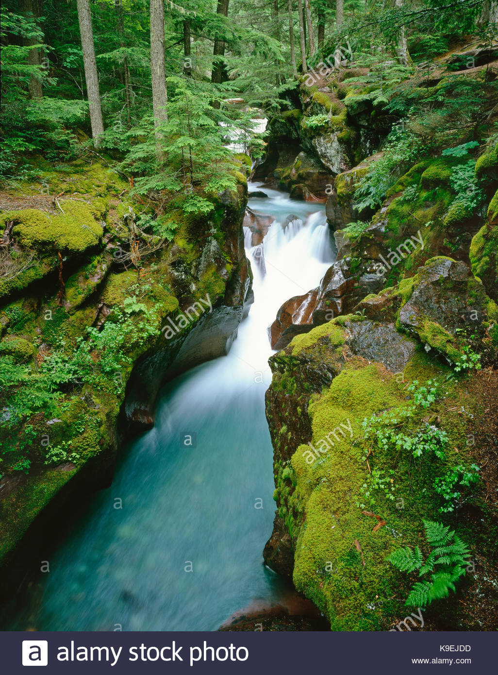 Avalanche Creek after Rain, Glacier National Park, Montana - Stock Image