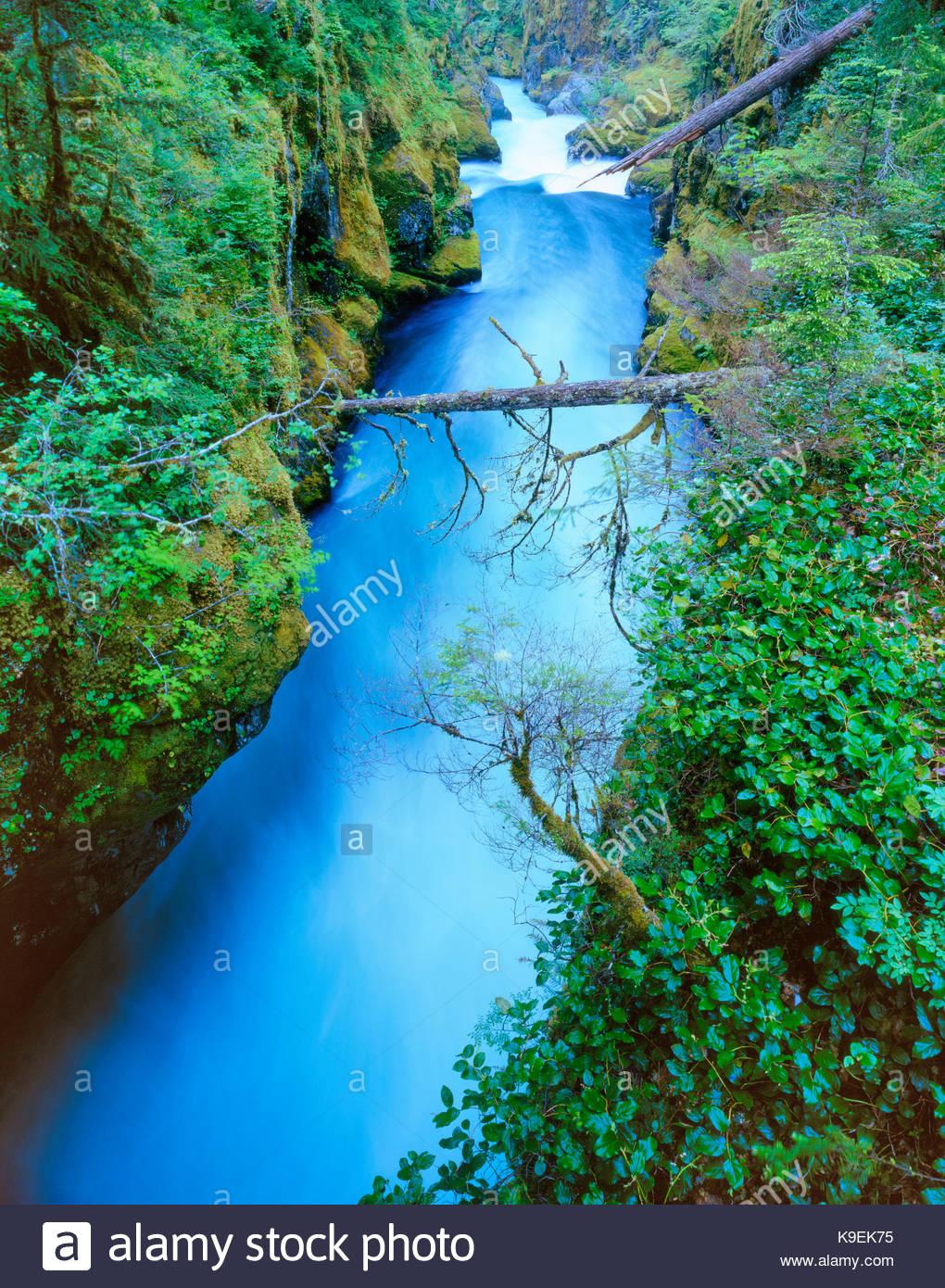 Ohanapecosh River,Mount Rainier National Park, Washington - Stock Image