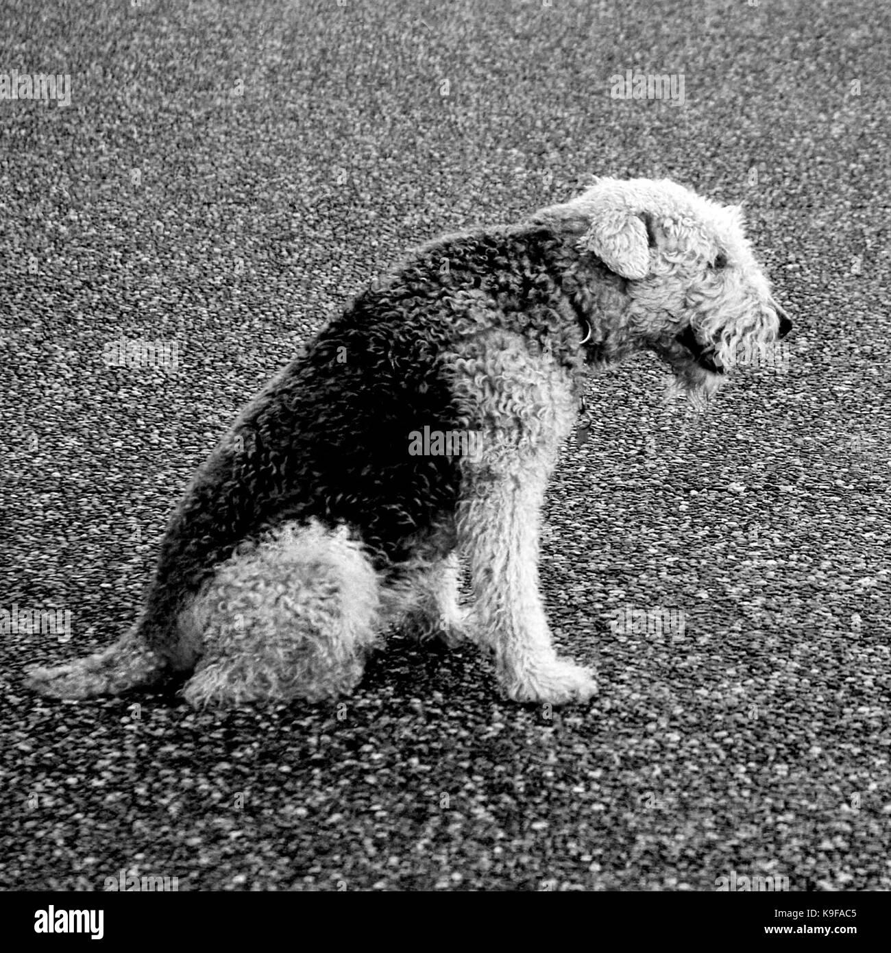 Dog Days - Stock Image