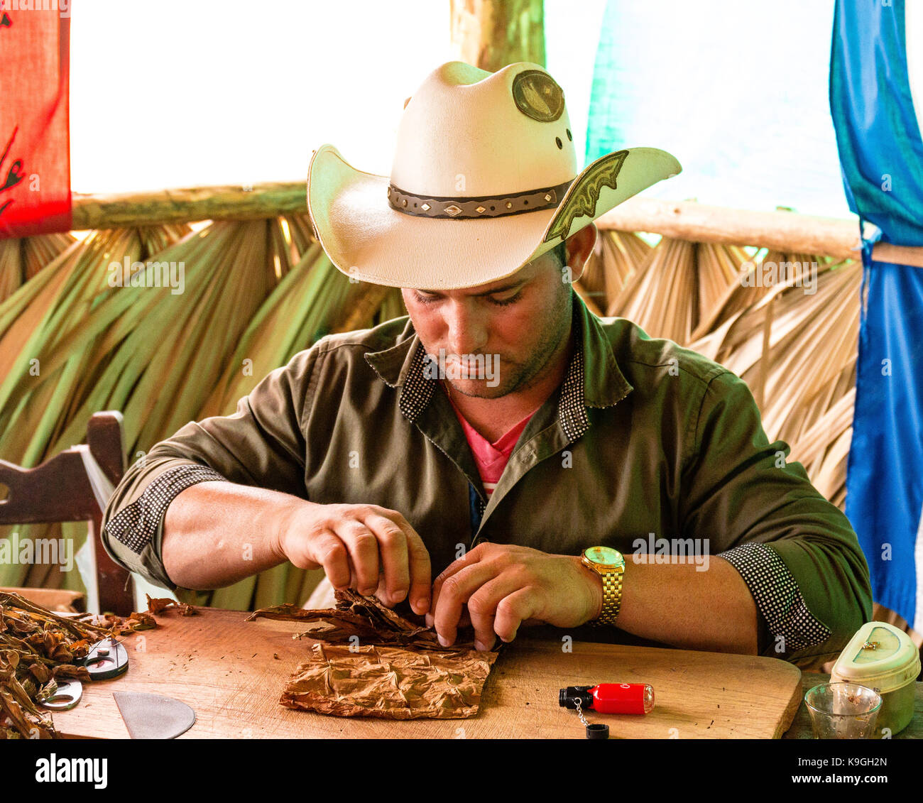 Tobacco farmer  hand rolling tobacco leaves to make a  Cuban cigar on a tobacco plantation, Vinales Valley, Pinar - Stock Image