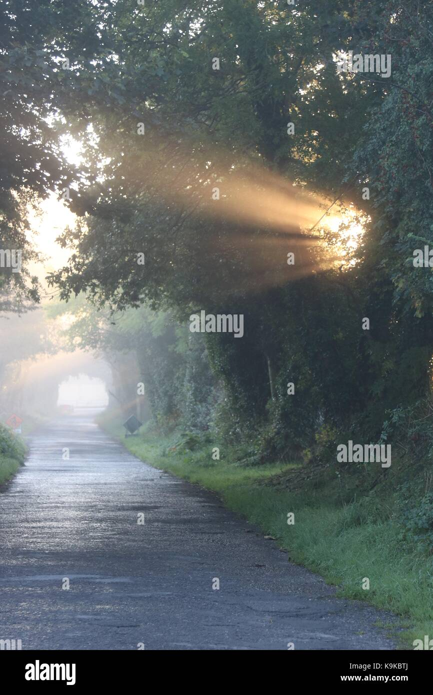 early morning sun shining through trees and burning off mist on a quiet country lane - Stock Image