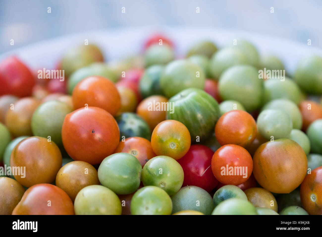 A bowl of late season mixed green and red tomatoes - Stock Image