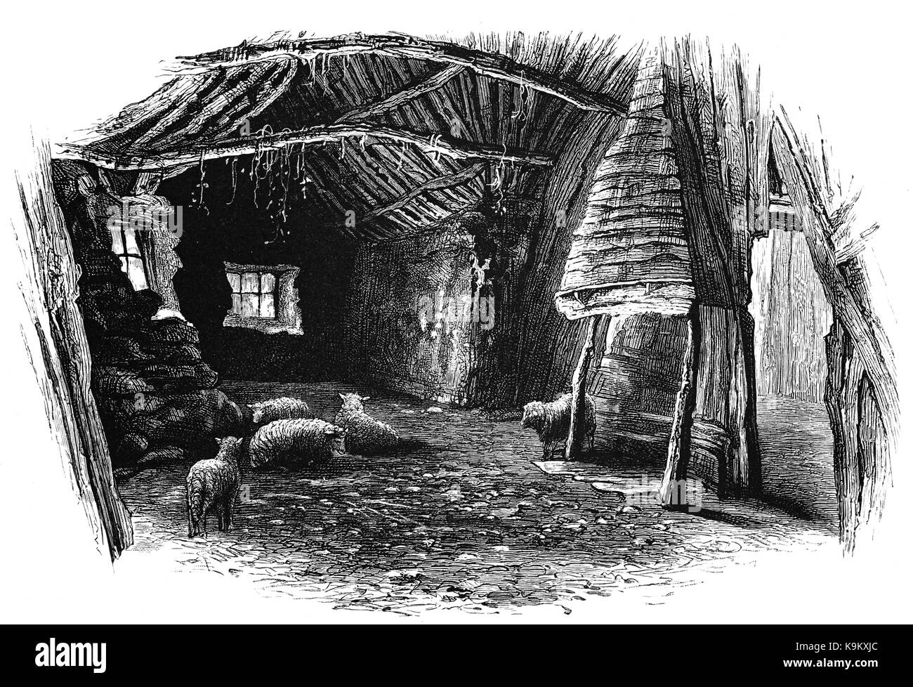 1870: Sheep in the King's Stables' is a ruined thatched cottage which lies in a depression called Stable - Stock Image
