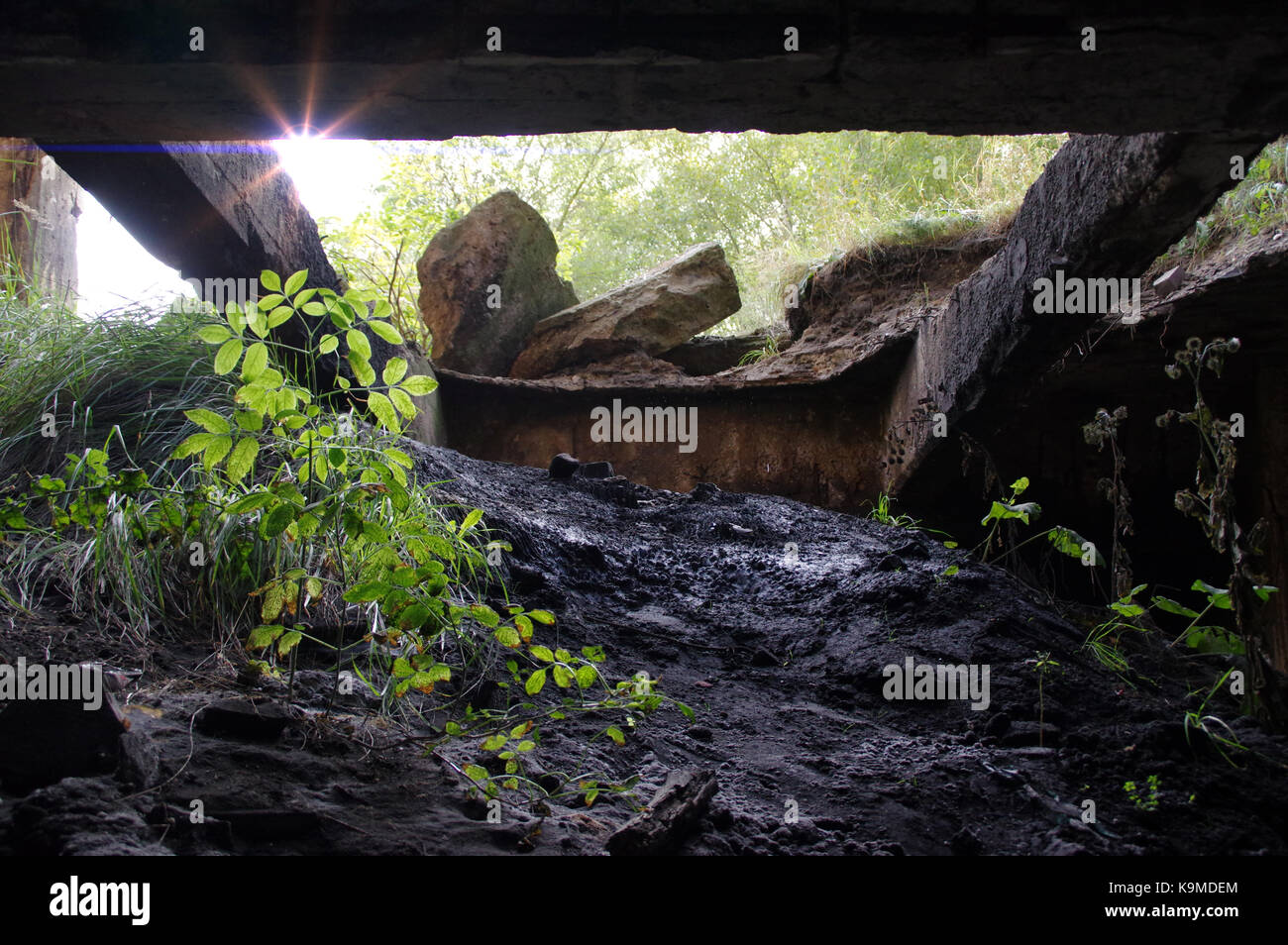 The new world after nuclear war apocalypse - concept. Plants at the exit of the destroyed shelter. - Stock Image