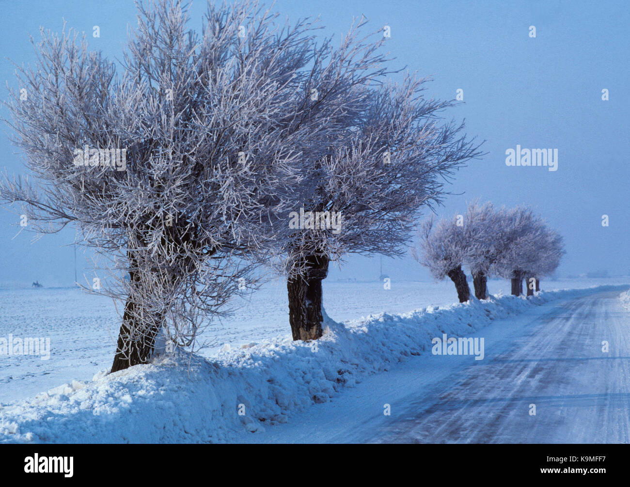 WINTER ROAD in Skåne with willow in frost 2014 - Stock Image