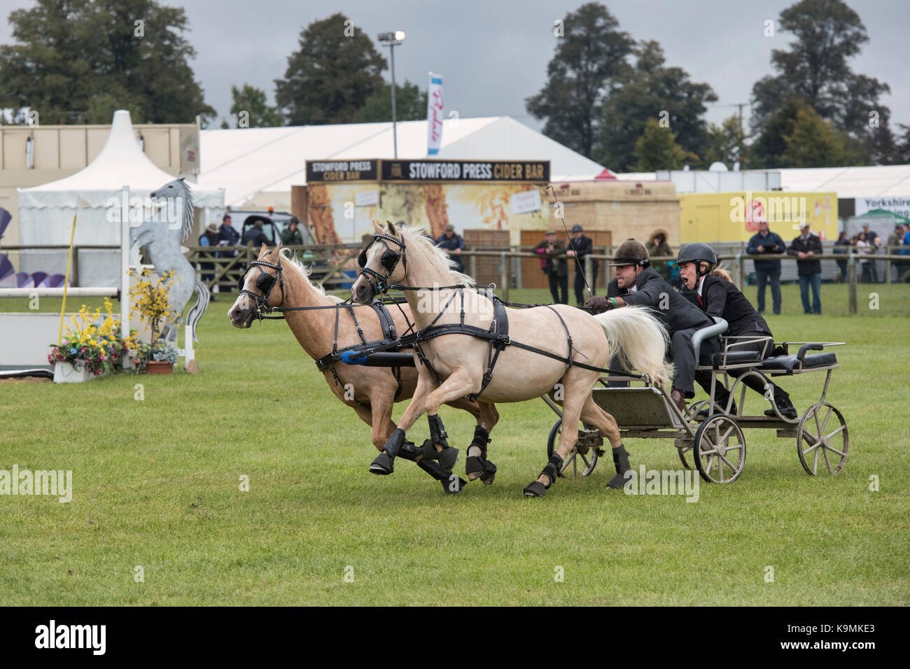 Double Harness Scurry Driving. Scurry driving in the main arena at The Royal County of Berkshire show, Newbury. - Stock Image