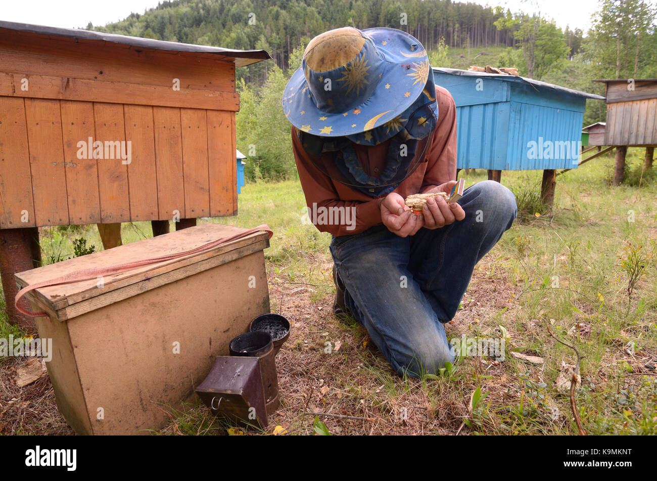 Apiary in the Carpathians. Beekeeper preparing a smoker for fumigating bees. - Stock Image