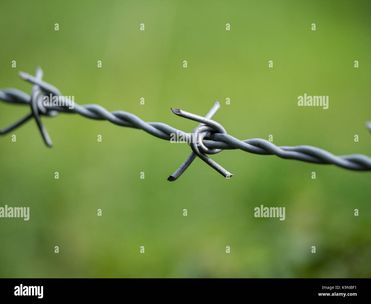 Close up of a spike of barbed wire against a natural background - Stock Image