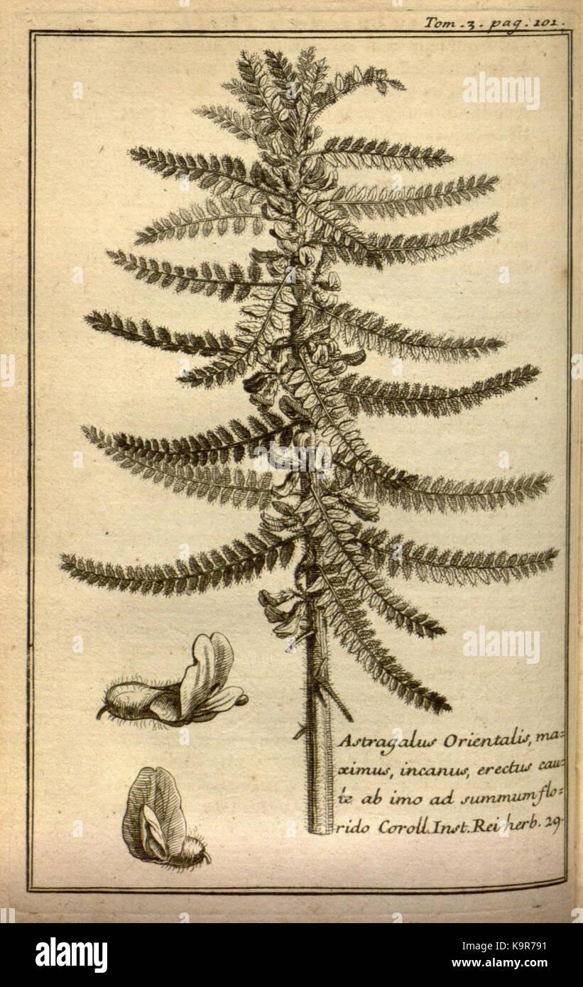 Relation d'un voyage du Levant (Plate 15) (7893889552) - Stock Image
