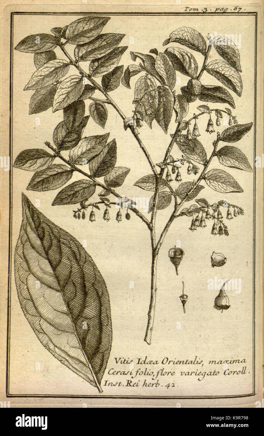 Relation d'un voyage du Levant (Plate 8) (7893881644) - Stock Image