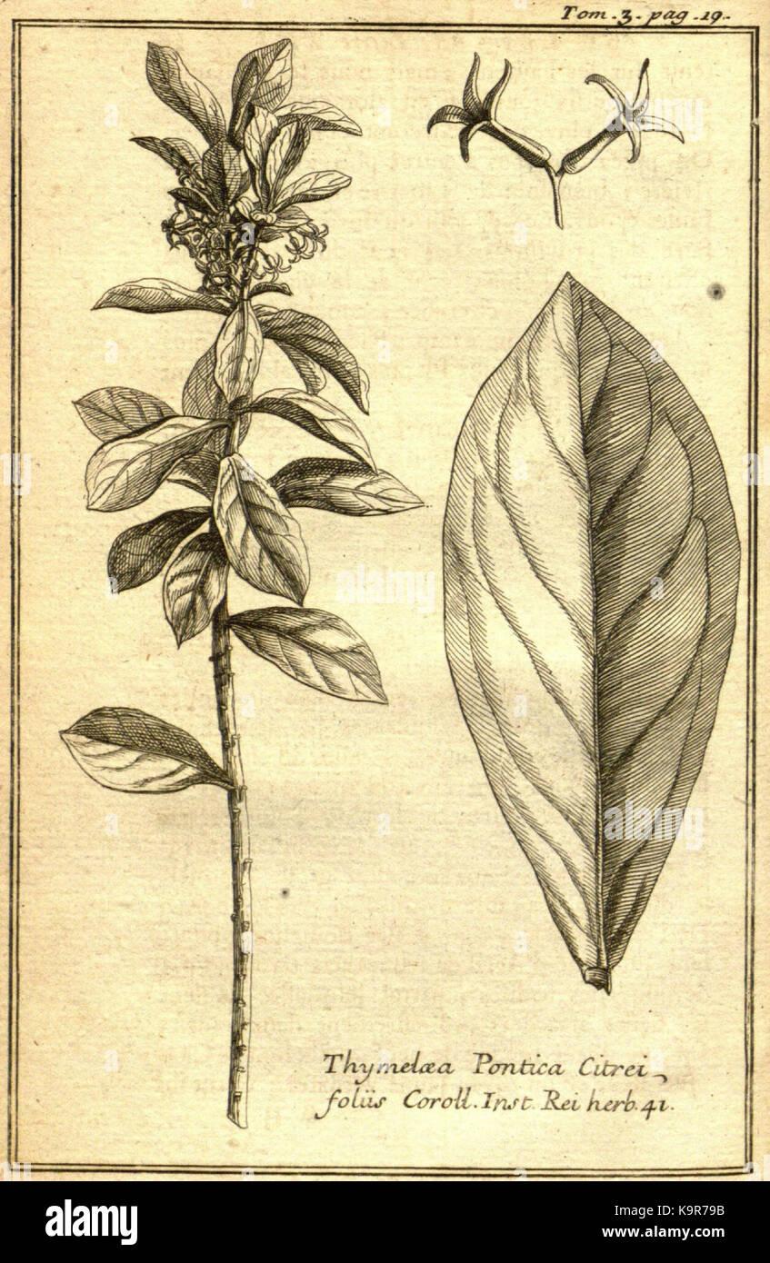 Relation d'un voyage du Levant (Plate 1) (7893872300) - Stock Image