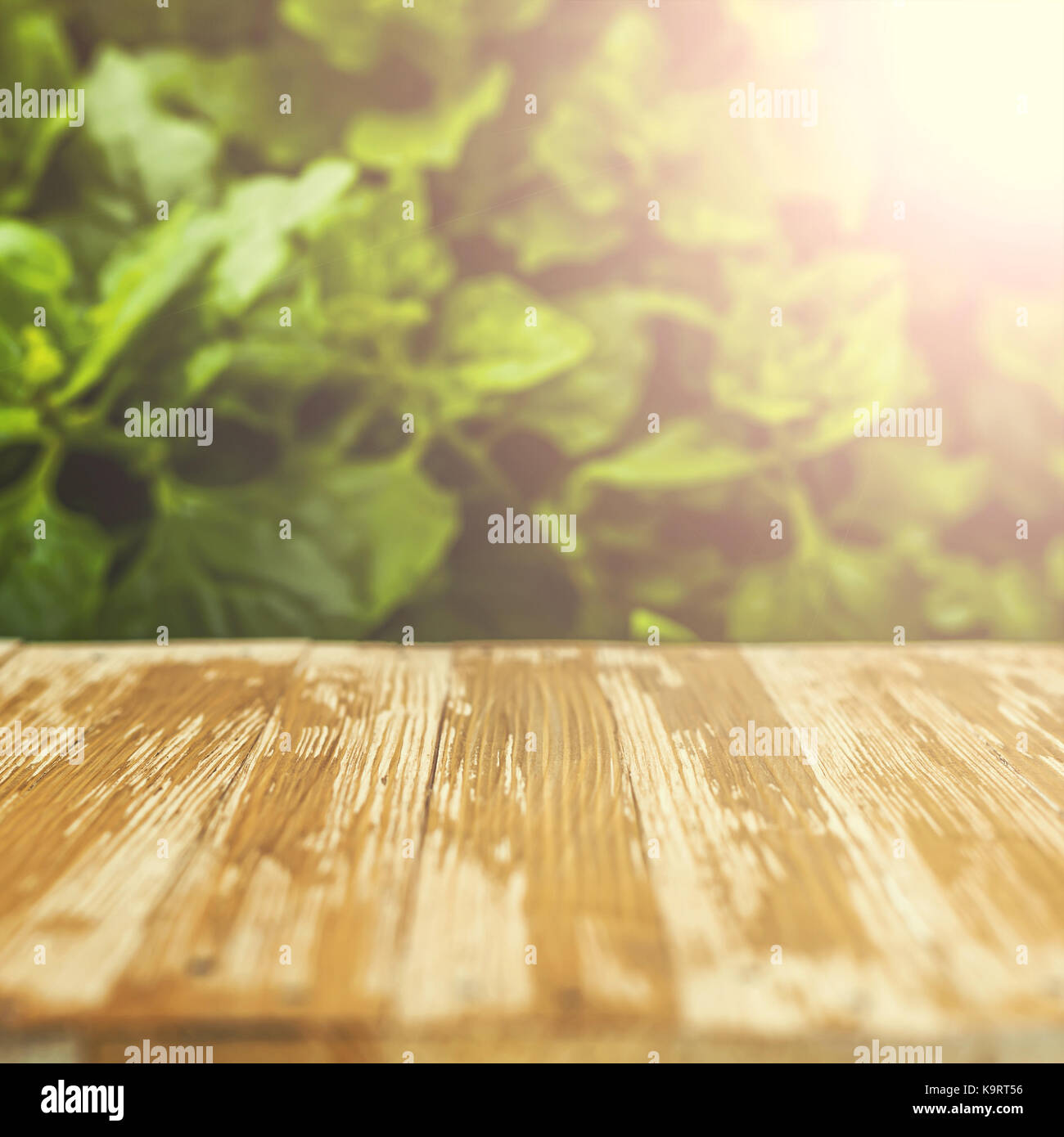 Empty Rustic Wood Table Top On Blurred Spinach In The Garden Background.  Can Montage Or Display Your Products.