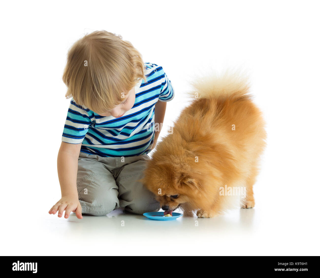 Little chiild boy feeding dog isolated on white - Stock Image