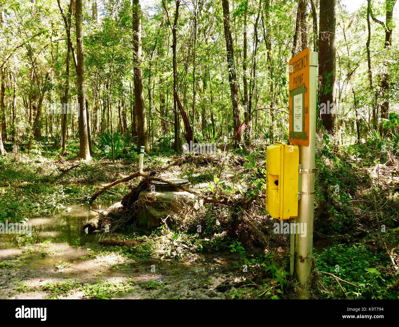 Emergency call box, telephone box, along flooded path in middle of urban forest. Gainesville, Florida, USA. - Stock Image