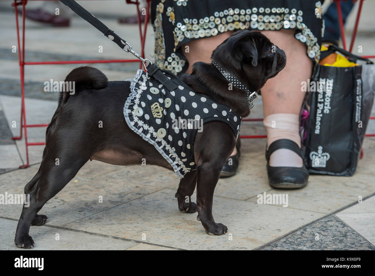 London, UK. 24th September, 2017. A Pearly Queens dog - The annual Harvest Festival organised by the Pearly Society - Stock Image