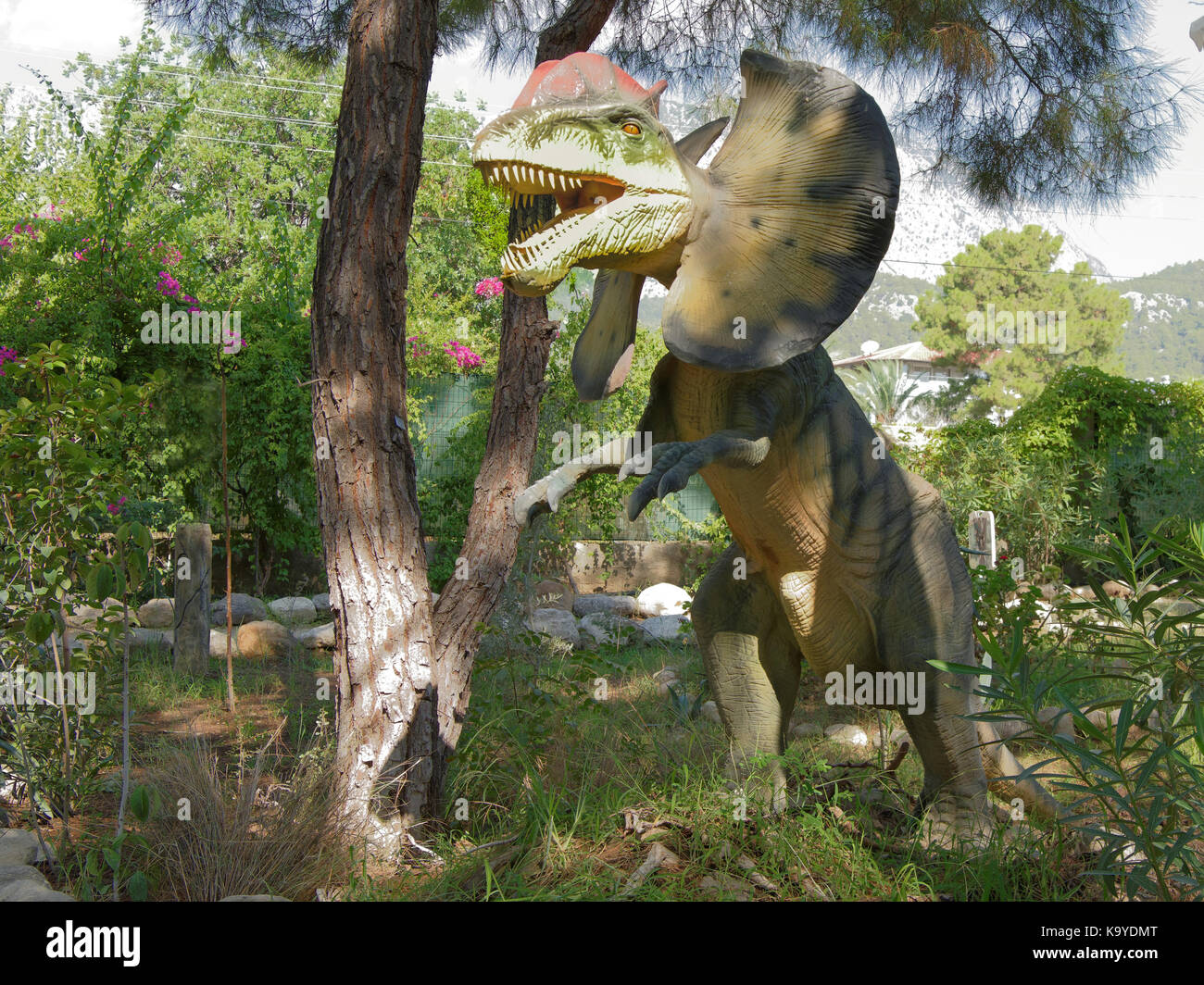 Kemer;Turkey- September 06; 2017: Dilophosaurus- Early Jurassic/ 200-190 million years ago. In the Dinopark - Stock Image