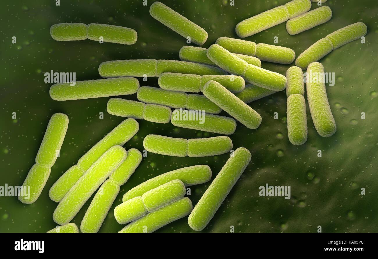 E. coli. Escherichia coli bacteria cells. 3D illustration - Stock Image