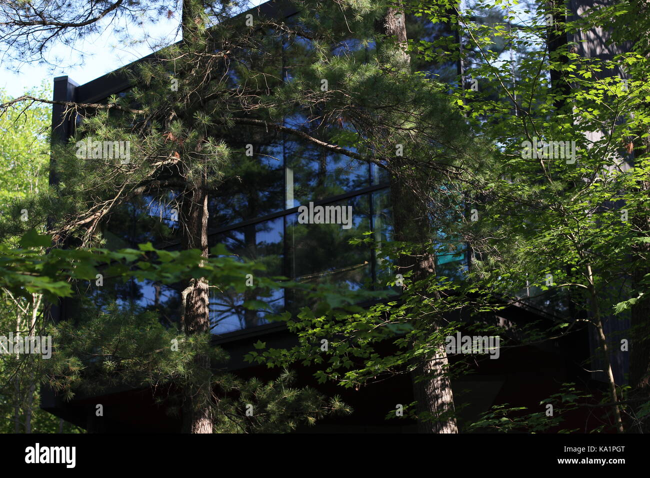 Modern Building Hidden Within The Forest Stock Photo 161079544 Alamy