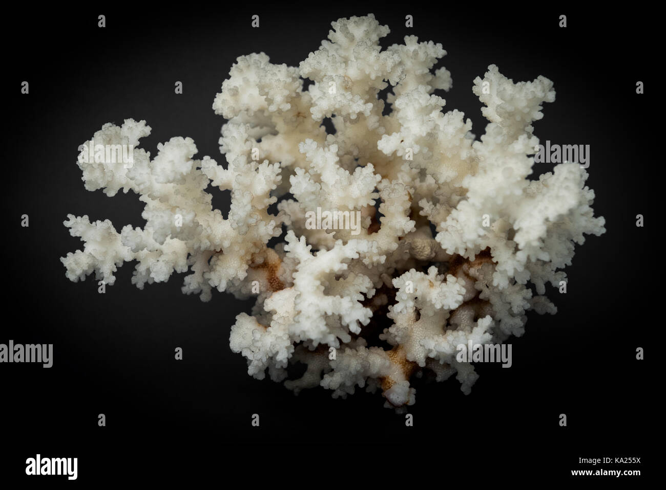 Coral - Stock Image
