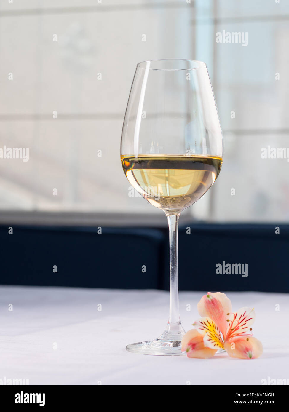 Glass of white wine on a white background and with soft shadow. Beautiful flower near on the table in restaurant - Stock Image