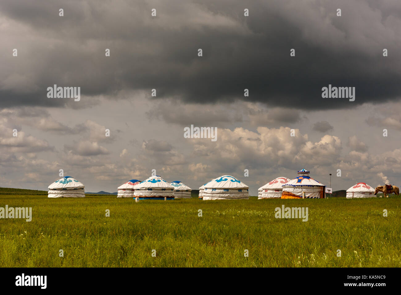 Typical group of Yurt in Mongolian grassland - Stock Image