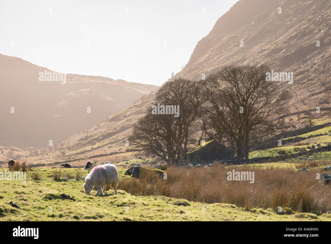 Looking up the Wythburn Valley as it heads down from Ullscarf and Steel Common towards Thirlmere.  I have taken - Stock Image