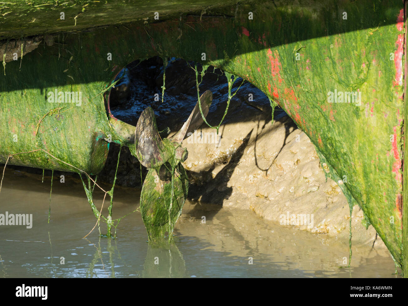 Hull of a boat out of water showing the propeller and rudder covered in green algae. - Stock Image