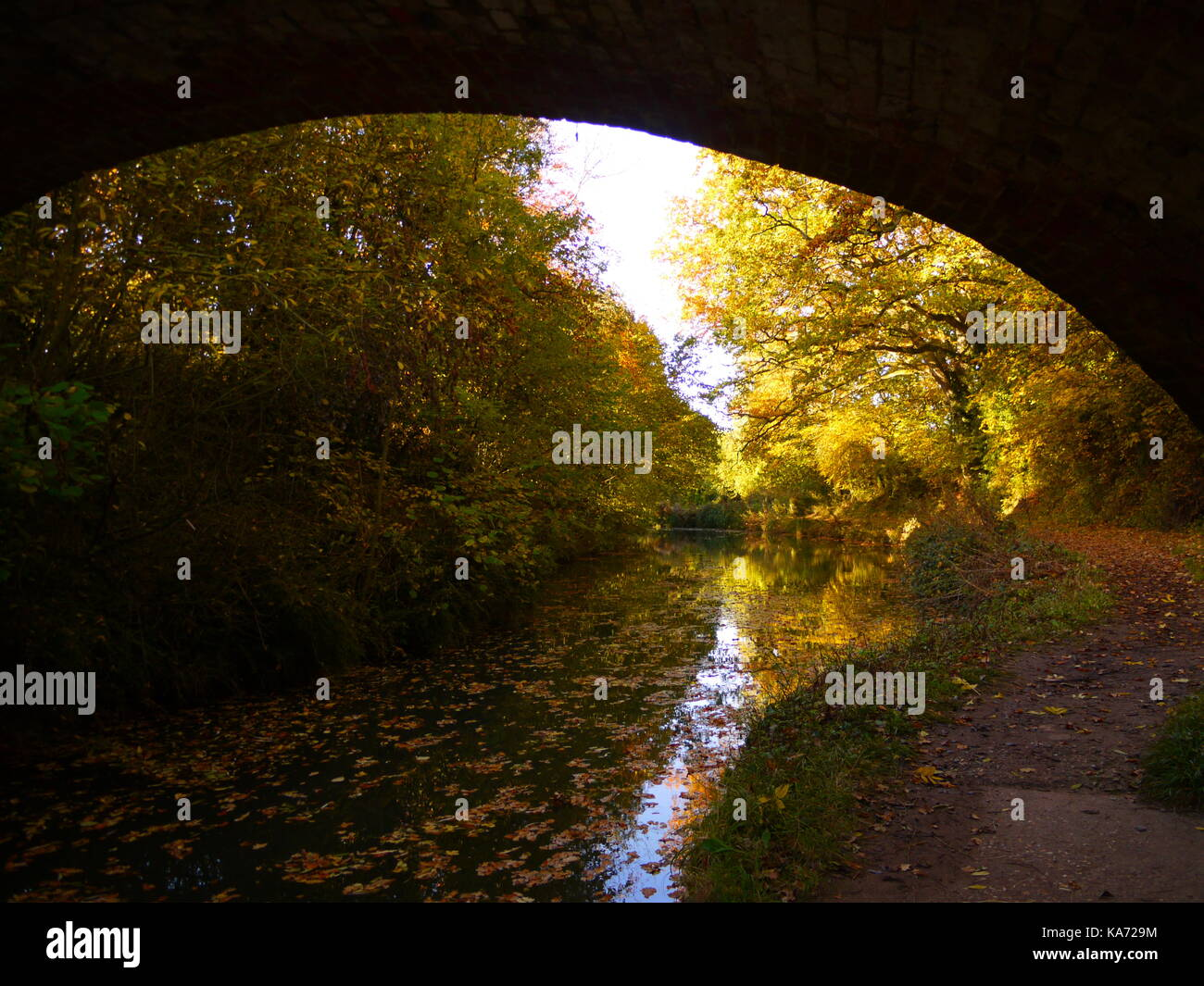 The Basingstoke Canal - Stock Image