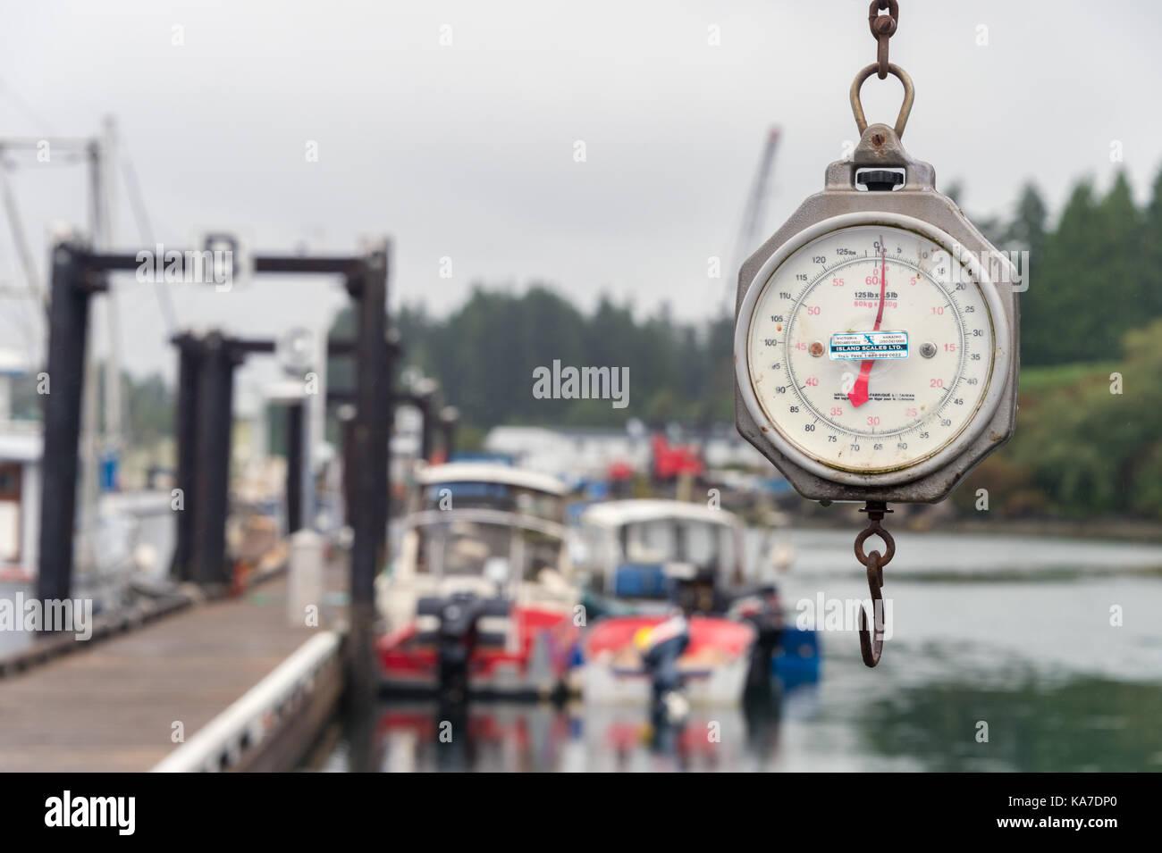 Tofino, British Columbia, Canada - 9 September 2017: Fishing Hanging Weight Scale at Tofino Fisherman's wharf - Stock Image