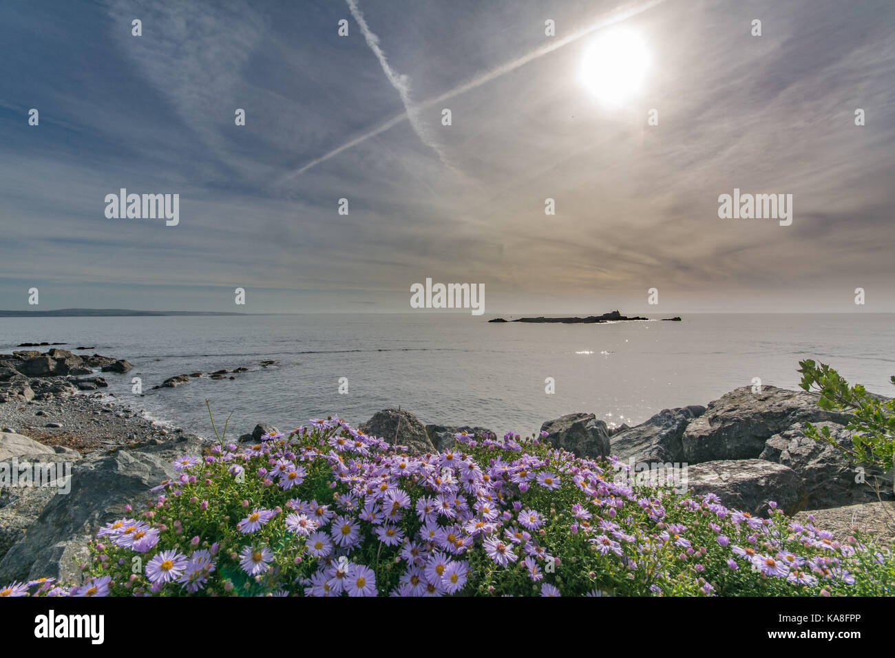 Michaelmas daisies in bloom against a backdrop of the sea at Mousehole in Cornwall. Stock Photo