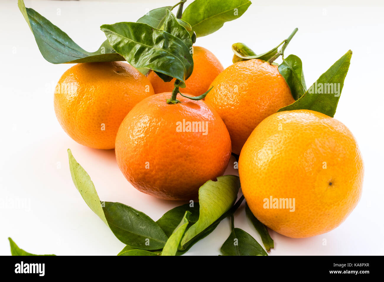 Fruit. Five Oranges attached to vine with green leaves on white background. - Stock Image