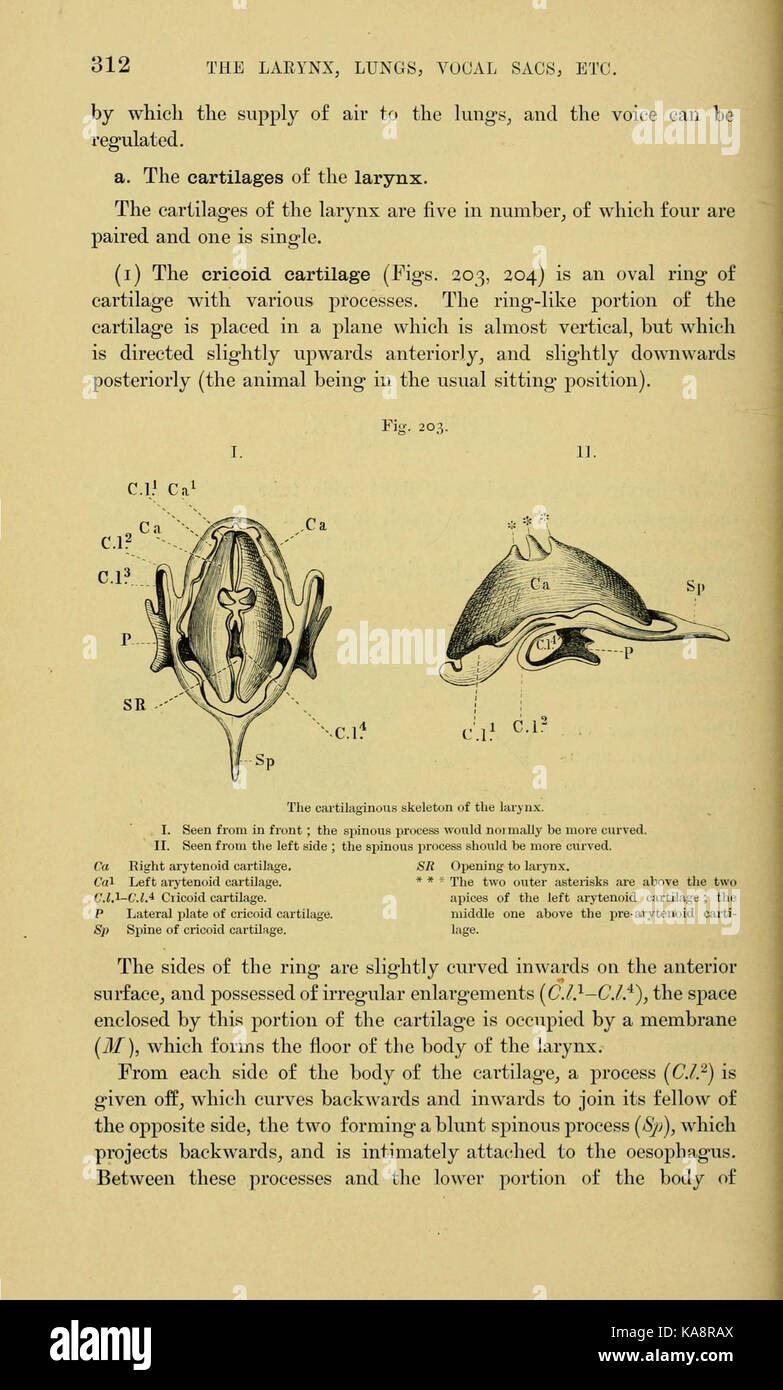 The anatomy of the frog (Page 312, Fig. 203) BHL7555036 Stock Photo ...