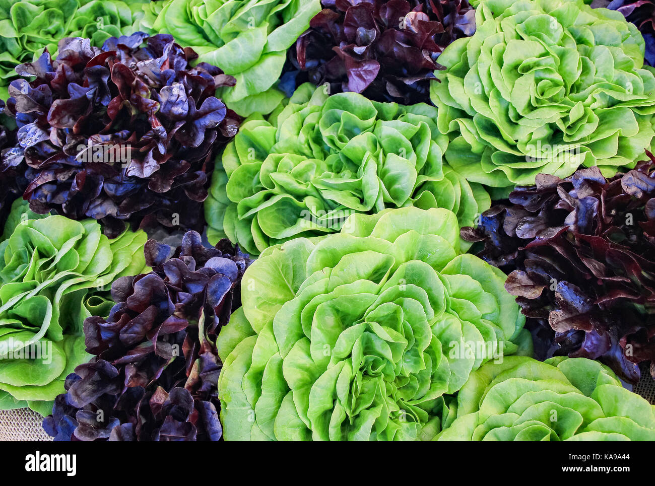 Local Farmers Market; mixed lettuce - Stock Image