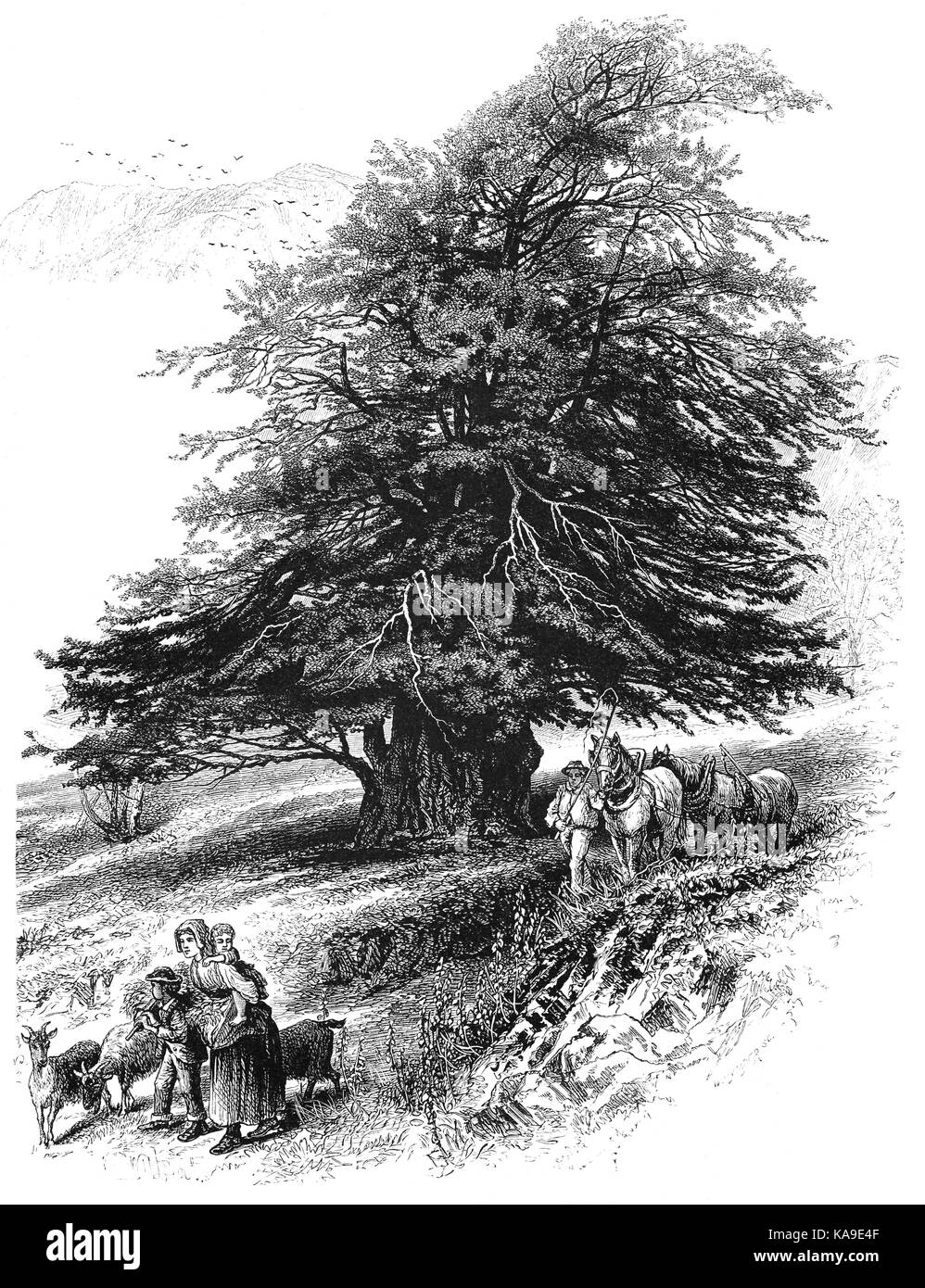 1870: A farming family travelling past an old Yew Tree in Yewdale near Coniston Village, the Lake District, Cumbria, - Stock Image
