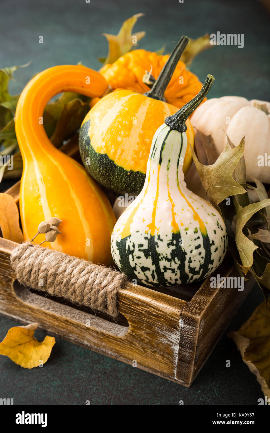 Autumn thanksgiving composition - Stock Image
