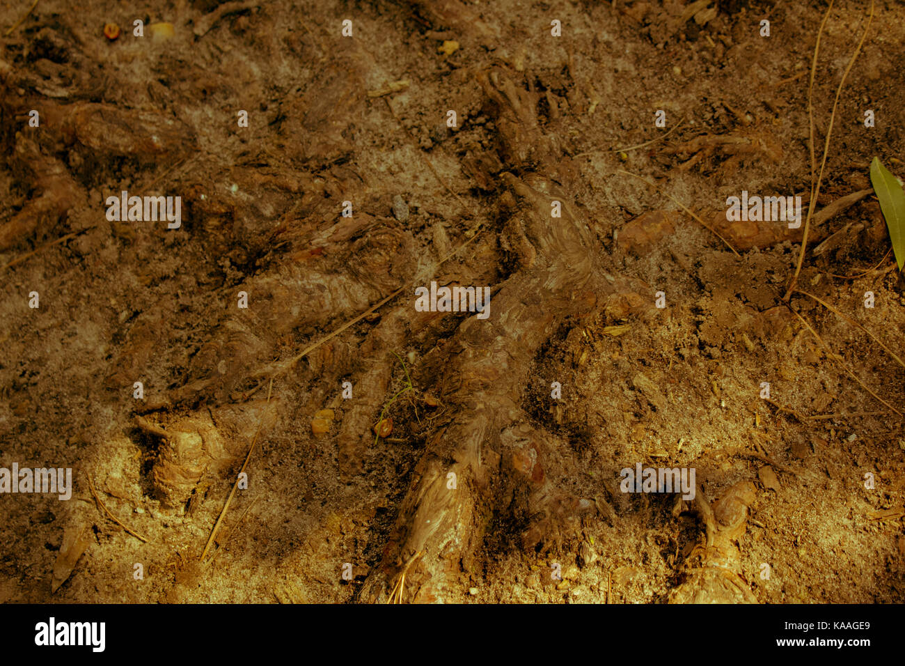 Tree's root - Stock Image