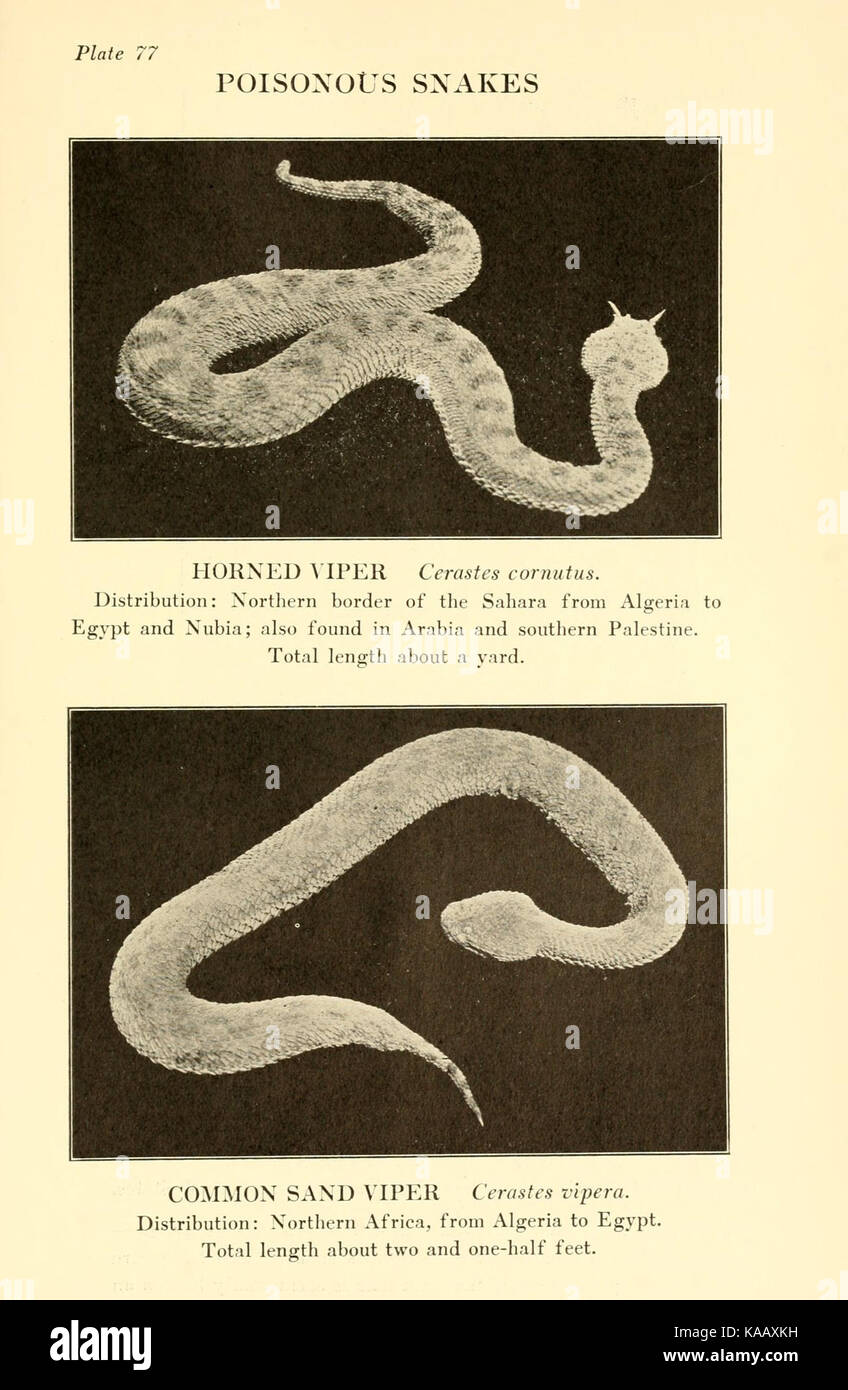 Reptiles of the world (Plate 77) BHL4031793 - Stock Image
